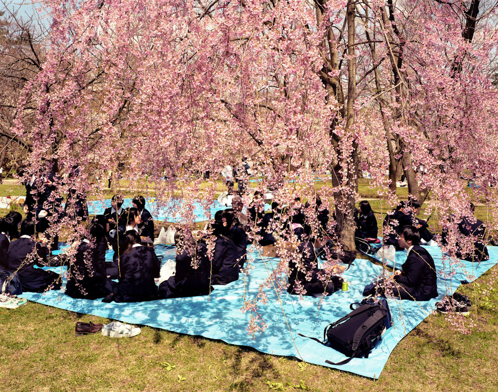 Students on a picnic under plum tree